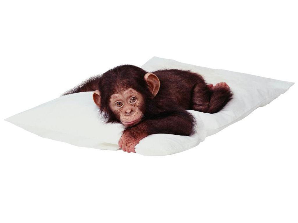 год обезьяны гармонирует с каким знаком зодиака