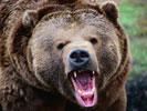 Обои для рабочего стола: фото белый медведь, фотографии бурый медведь, панда