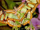 Обои для рабочего стола: фото, фотки бабочки, butterfly, фотографии, картинки бабочек