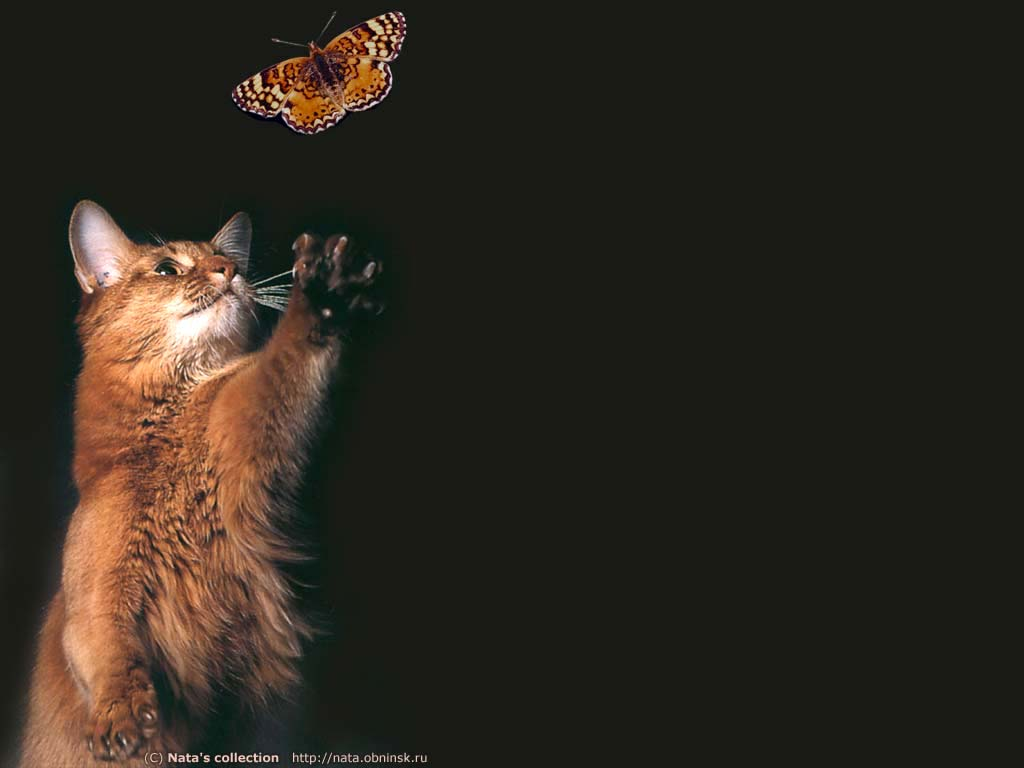 кошка ловит моль