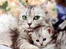 Обои для рабочего стола: кошки, котята, фотографии с кошками, фото с котятами