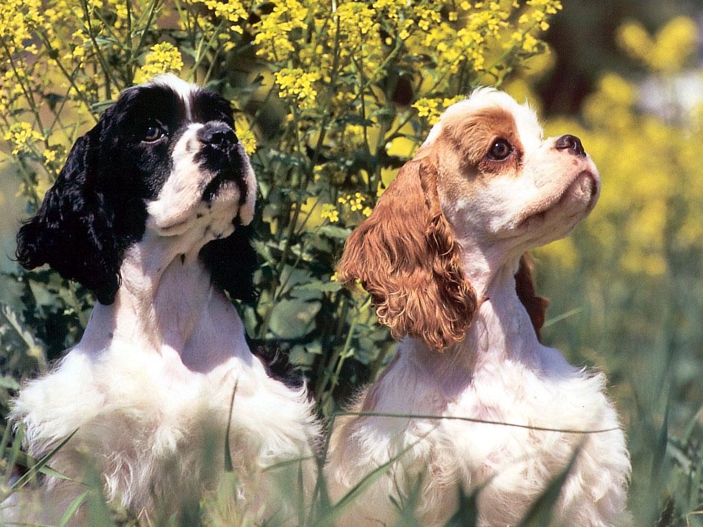Картинки фото с животными