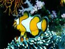 Обои для рабочего стола: морские и аквариумные рыбки