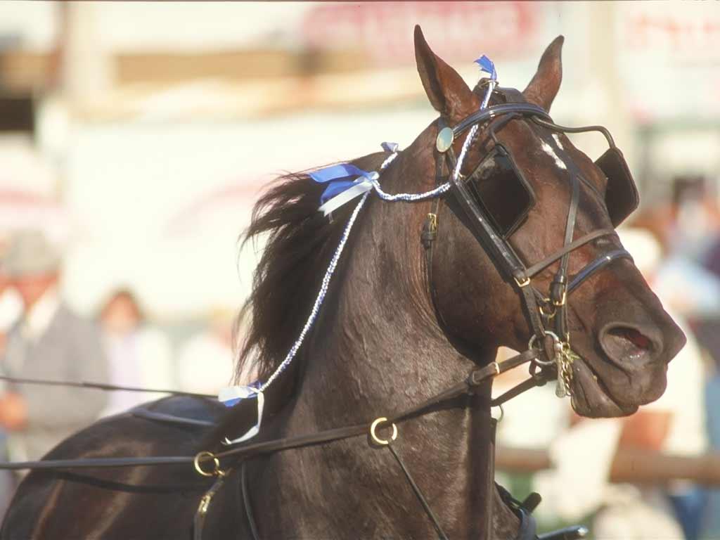 обои для рабочего стола лошади
