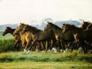 обои, заставки и фотографии с лошадьми