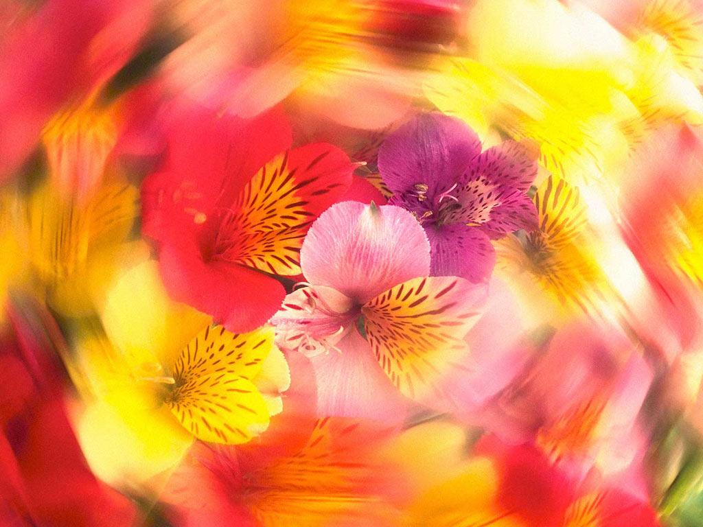 """Схема вышивки  """"Цветы """": таблица цветов."""