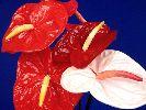 Красивые обои для рабочего стола - Цветы, комнатные цветы, виртуальные цветы! Free Computer Wallpaper, скачать, фото цветов, заставки