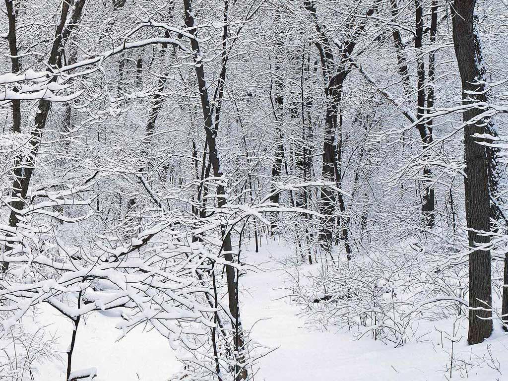 Зимние заставки на рабочий стол