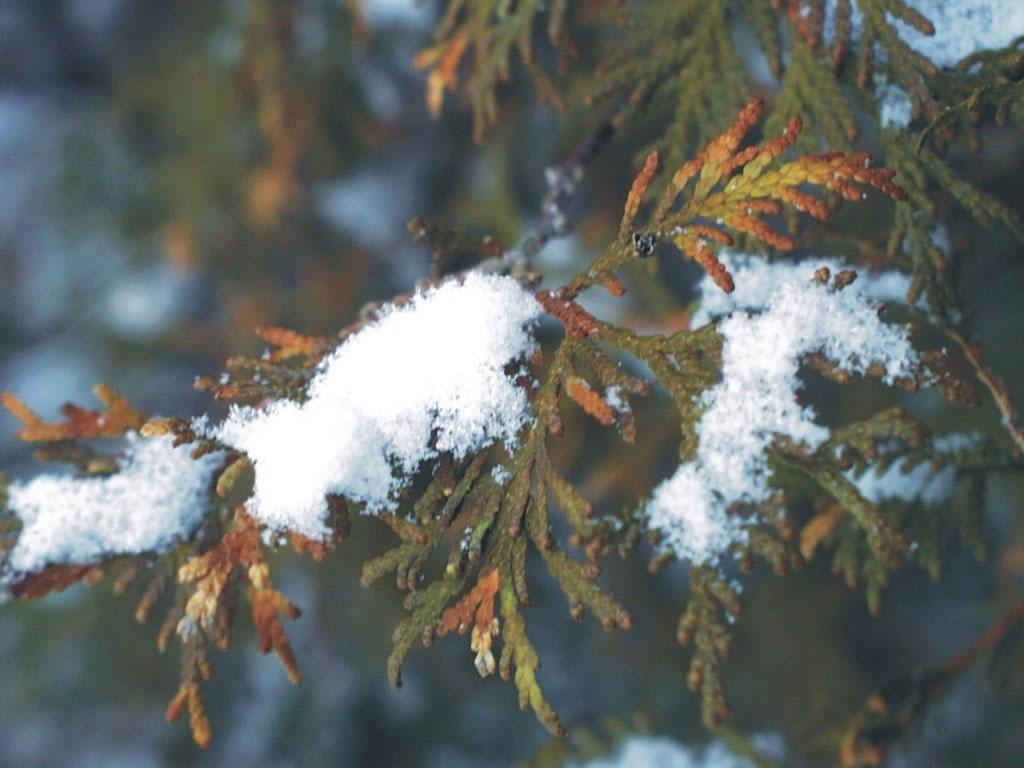 Картинки зима для