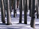 Лучшие обои для рабочего стола, зимние заставки - Природа! Заставки на рабочий стол, фото природы зимой