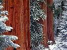 зимние темы для рабочего стола, обои и фото зимы