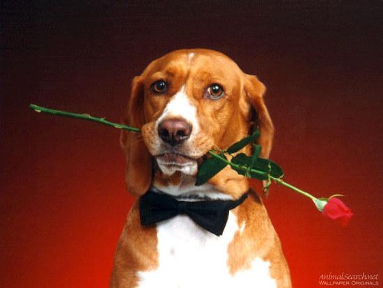 поздравительная открытка ко дню святого валентина