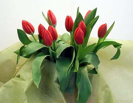 поздравительная открытка с днем святого валентина - тюльпаны